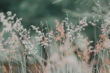 Salliminen luo tilaa rakkaudelle kuinka sallia itsensa ja tunteensa